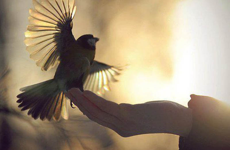 Image result for sufi bird