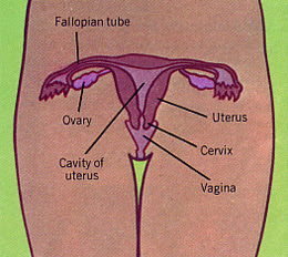 A Dozen Lessons from Tyra's Vagina | Lucy the Blog
