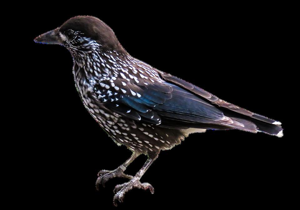 760+ Foto Gambar Burung Format Png HD Terbaik Free