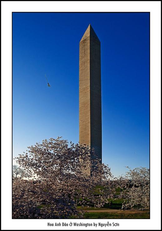 016 Mùa Xuân Washington