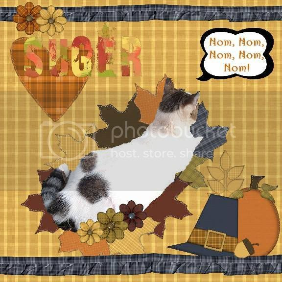 Domestic Cat,Thanksgiving