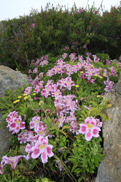 Plantas De Chile En Extinción Estas Son Las 10 Especies Que Podrían