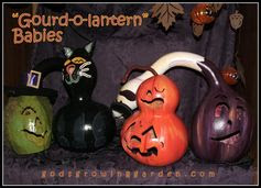 """My """"Gourd-o-lantern"""" Babies by Angie Ouellette-Tower @ godsgrowinggarden.com"""