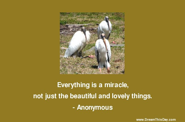 Miracles Sayings Miracles Quotes Sayings About Miracles