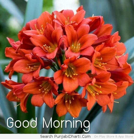 Good Morning Graphicsimages For Facebook Whatsapp Twitter