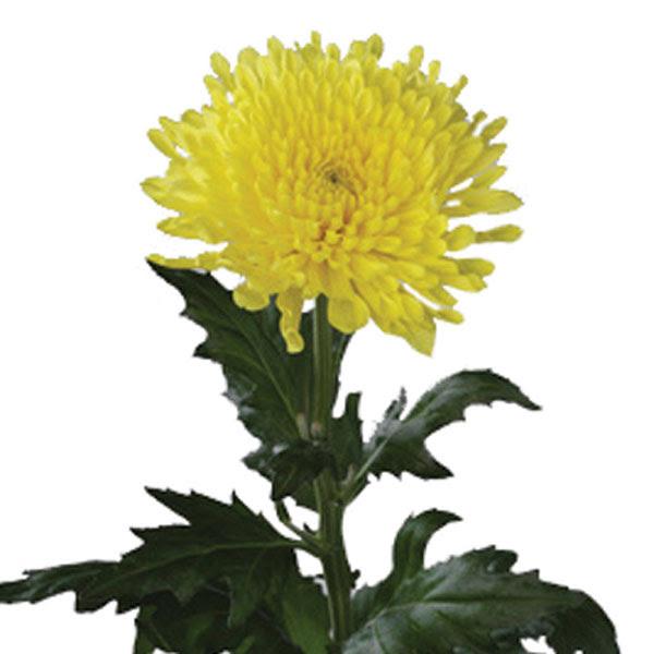 http://www.po.flowerscanadagrowers.com/uploads/2011/10/6244_50.jpg