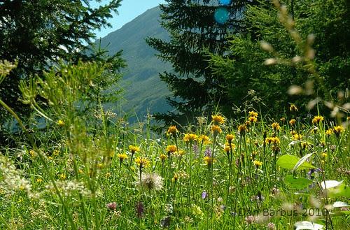 sommer flowers