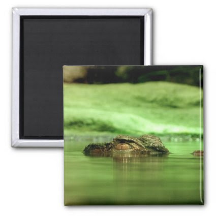 Alligator Peeking Out of the Water Magnet