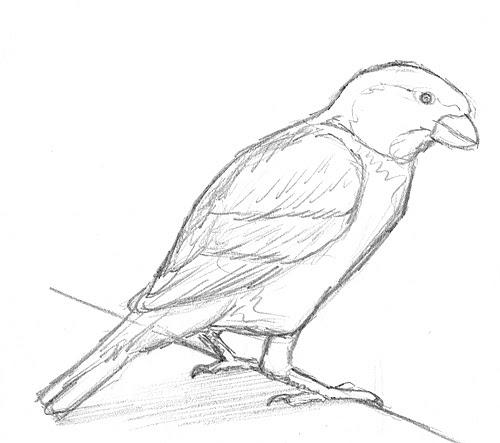 papagei zeichnen vorlagen