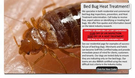 Tricks to find out if you have bed bugs, centipede repellent homemade, bed bug heat treatment