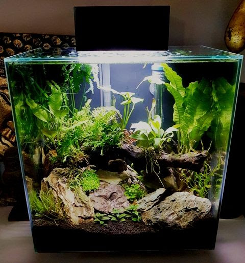 Aquascape Ideas Fluval Edge Aquascape Ideas