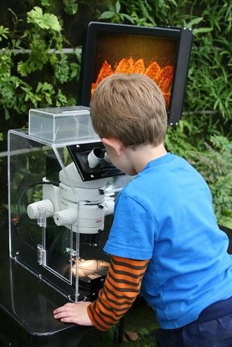 huntington future botanist
