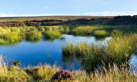 Peat Bog on Westerdale Moor in the North Yorkshire Moors National Park, UK