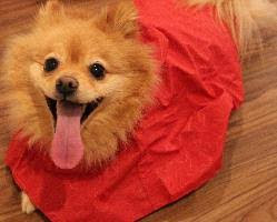 Pledge To Take Your Pets With You - The Humane Society of the