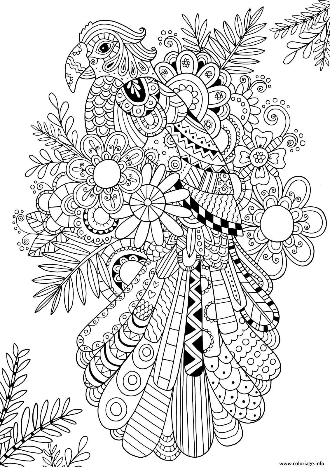 Coloriage Zentangle Perroquet Oiseau Adulte Dessin  Imprimer
