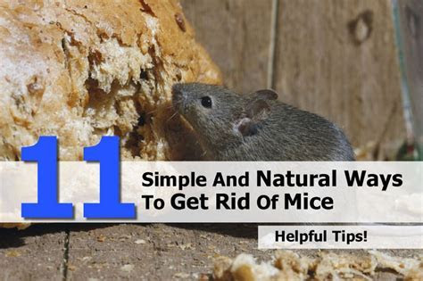 How To Get Rid Of Mice.html   PkHowto
