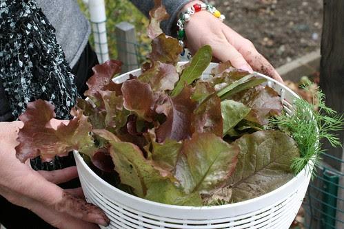 Thanksgiving lettuce  049