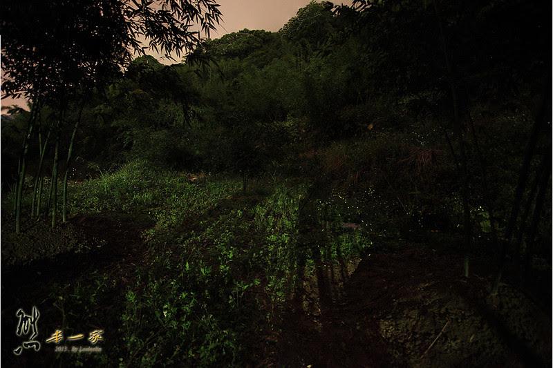 三峽景點賞螢|五寮國小周邊賞螢火蟲