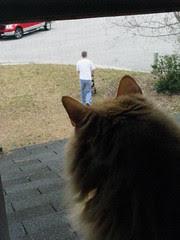 Jasper snoopervising the yard work