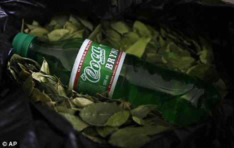 A bottle of newly launched energy drink Coca Brynco on a bed of coca leaves that Bolivians traditionally chew and are an ingredient of cocaine