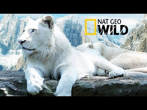 Nat Geo Wild Online