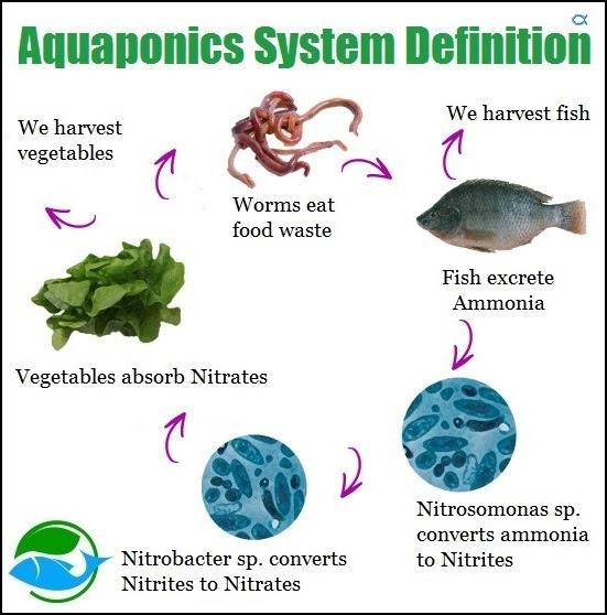 Aquaponics Of Meaning - aquaponic