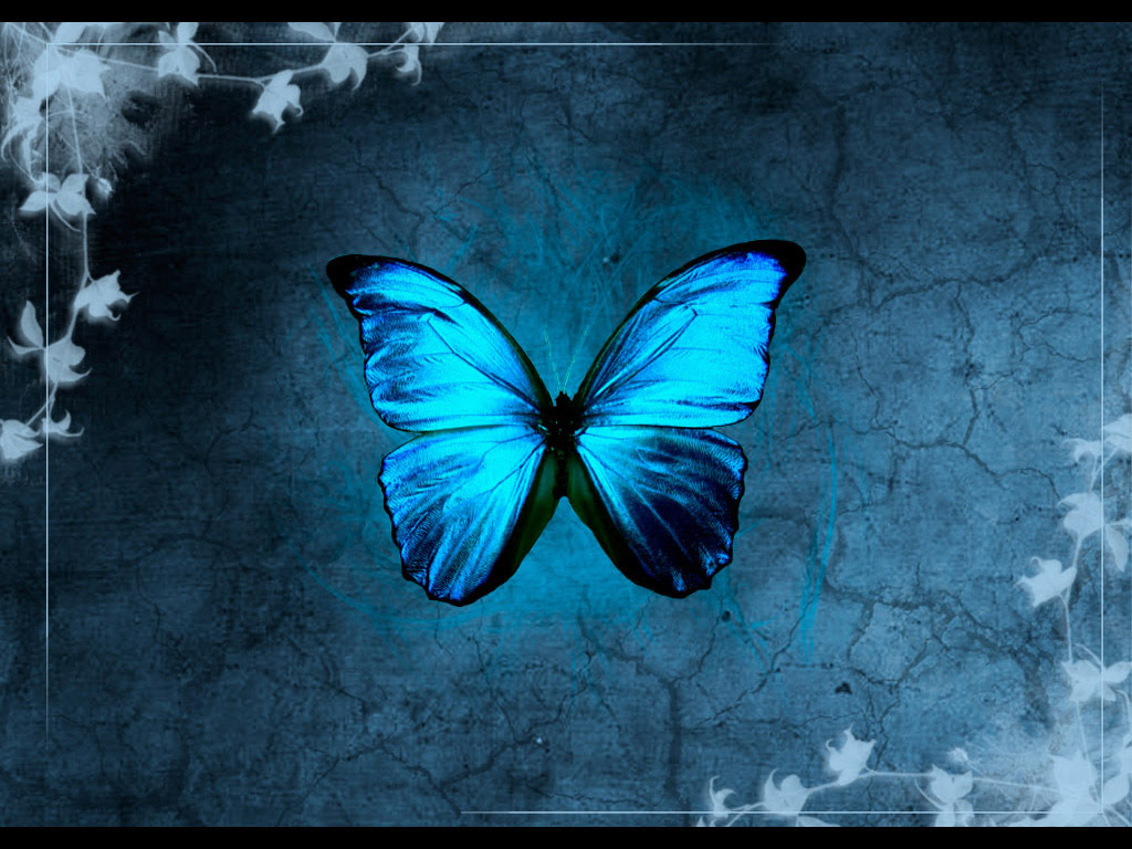 Beautiful colours of nature...Blue Butterfly or Purple ...