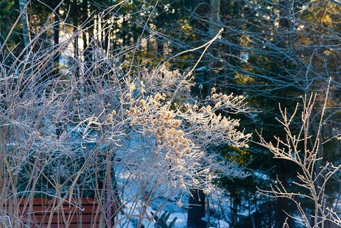 Sun through frost