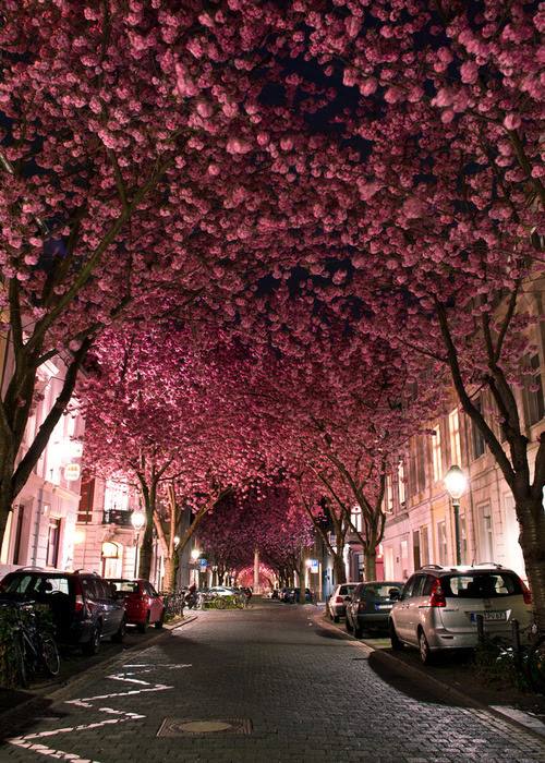 blossom lined streets
