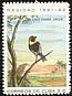 Cuban Grassquit Tiaris canorus