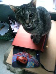 Maggie-top/laptop