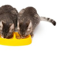 Why Do Cats Vomit Bile?   eHow