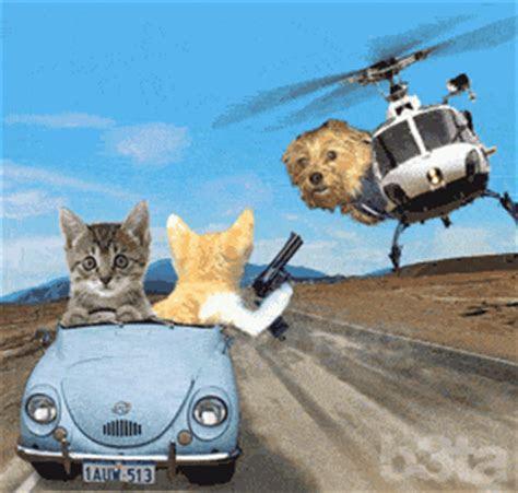gambar animasi kucing bergerak gambar animasi gif swf