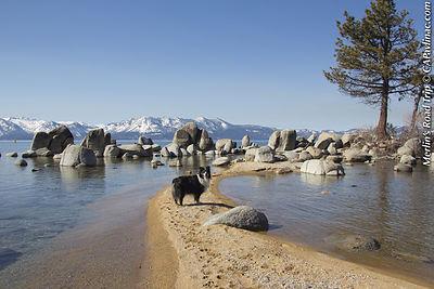 Tahoe Island Merlin