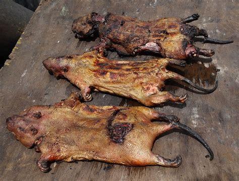 Kumasi: Bush Meat Market, Life in Captivity, and Puppies ? Michael G. Starkey
