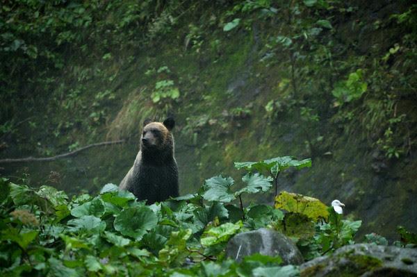 20110917-DSC_0268ezo-brown-bear