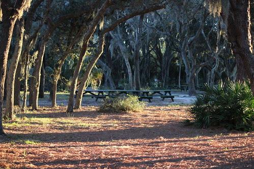IMG_3778_Trees_&_Spanish_Moss