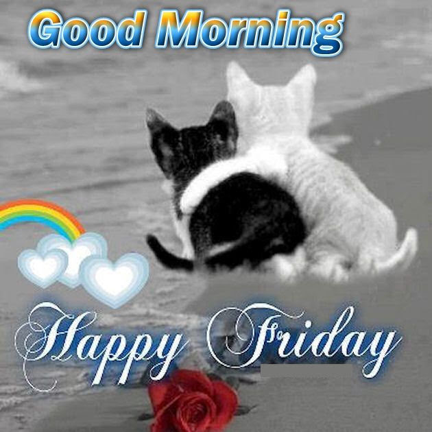 Good Morning Happy Friday Cute Quote Pictures Photos And Images