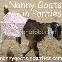Nanny Goat in Panties