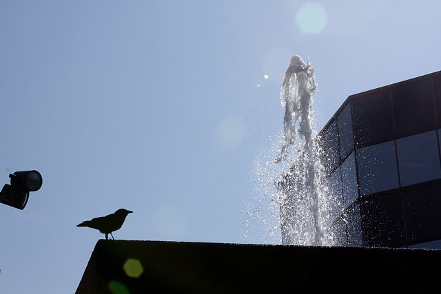 crow, fountain, sky