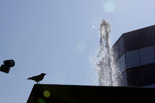 crow, fountain, sky