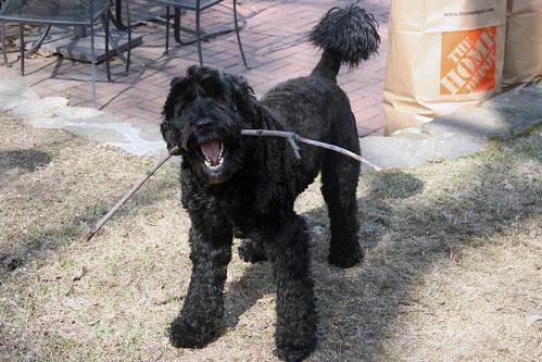 skippy with stick