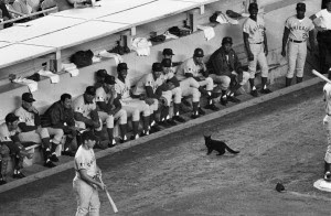 Black cat stopped the Cubs vs. Mets game momentarily in 1969. (Credit: New York Daily News Archive/Getty Images)
