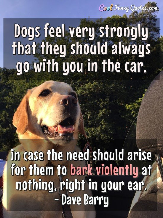 Dogs feel very strongly that they should always go with ...