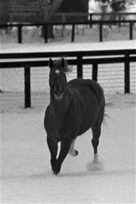 images  famous race horses  pinterest race