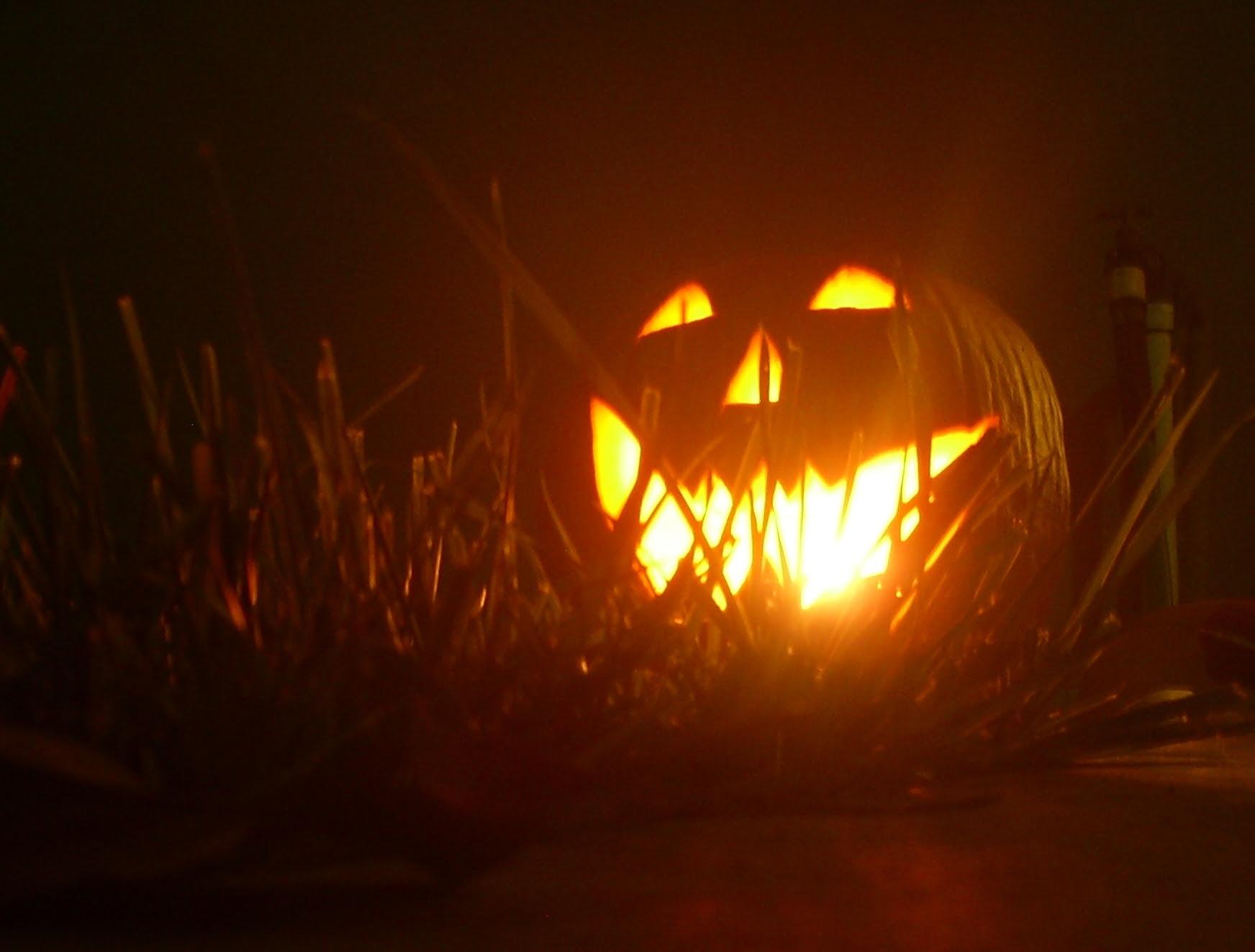 Harold S Jack O Lantern 2009 Halloween Photo 8883829 Fanpop