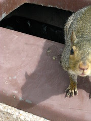 Eye contact with the squirrel