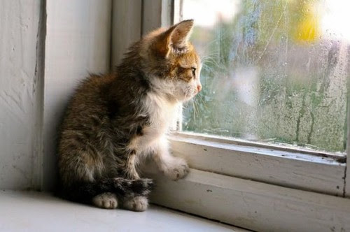 Cat_cute_kitty_window_kittens_rain-0b514f6fec002aea8321ef8dda743839_h_large