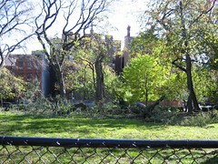 Blown Down Tree