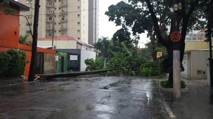 Chuva provoca enchentes e queda de 325 árvores em São Paulo